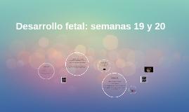 Desarrollo fetal: semanas 19 y 20