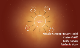 Rotation and Circumduction (Muscle System Frayer Model)
