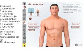 332 Células del cuerpo humano