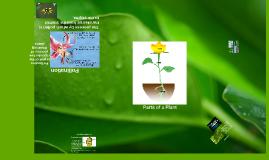 Plant Anatamoy and Life Process VA Science SOL 4.4