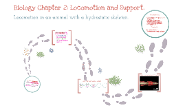 Biology Chapter 2:Locomotion and Support.