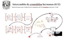Copy of Material de apoyo para el laboratorio de citogenética de FES