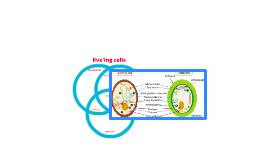 liveing cells