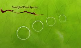 Identified Plant Species