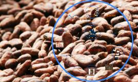 El comercio Justo y el cacao