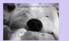 Why Owning a Dog Makes You Happy
