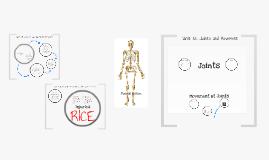 Copy of GCSE PE The Skeletal System