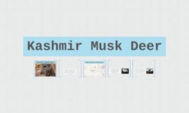 Kashmir Musk Deer