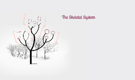 The Skelatal System