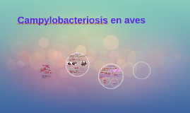 Campylobacteriosis en aves