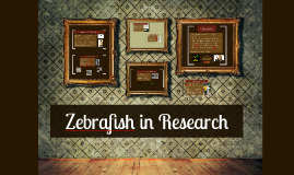 Copy of Zebrafish and Research