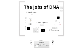 The Jobs of DNA