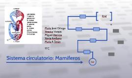 Sistema circulatorio: Mamíferos