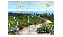 bean trees essay theme 1 analyze the women's world in which the bean trees takes place 2 how do the characters in the bean trees demonstrate that th.