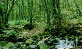 Copy of Parque Nacional de Garajonay.