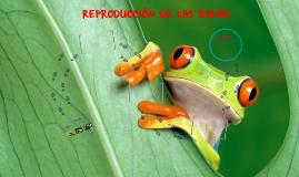 REPRODUCCIÓN DE LAS RANAS
