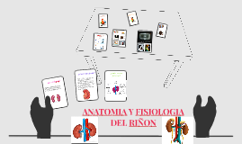 ANATOMIA Y FISIOLOGIA DEL RIÑON