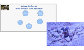 Animal Welfare At Point Defiance Zoo & Aquarium