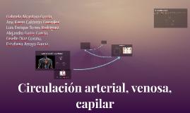 Copy of Circulación arterial, venosa, capilar y Sistema linfático
