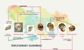 Evolutionary Cladogram