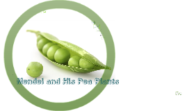 Copy of Mendel and His Peas
