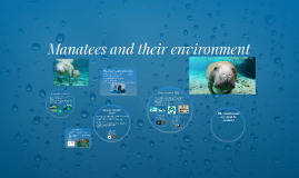 Manatees and their environment