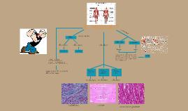 Scienze : Il sistema muscolare