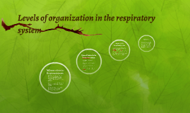 Levels of organization in the respiratory system