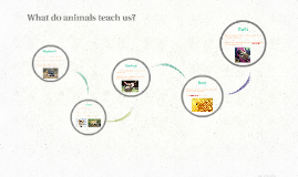 What do animals teach us?