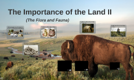 The Importance of the Land II (The Flora and Fauna)