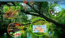 GEF Programa Amazonia