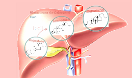 Copy of Biossíntese do Colesterol