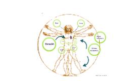 Sistema Circulatorio y Digestivo