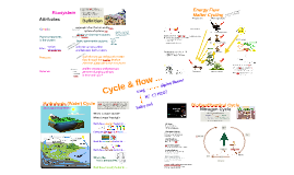 Eco 4: Ecosystem