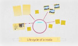 Life cycle of a koala