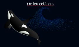 Copy of Arctic Whale Species