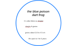 the blue poison dart frog