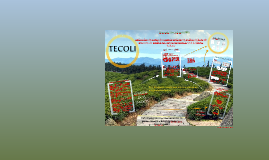 Copy of Copy of Copy of TECOLI