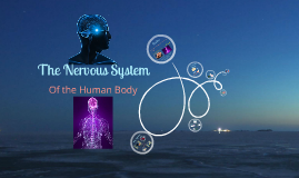 http://www.mananatomy.com/body-systems/nervous-system