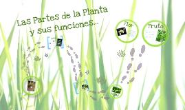 Las Plantas: sus partes y funciones