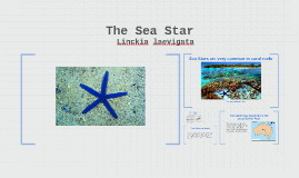 Sea Stars and Their Significance