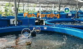 Copy of Fish Breeding