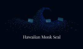 Hawaiin Monk Seal