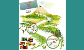 Choosing Foods