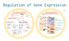 Copy of AP Bio-  Molecular Genetics 3: Regulation of Gene Expression