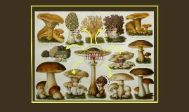 Fungos - PCC SAÚDE