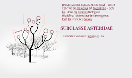 Subclasse Asteridae