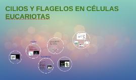 CILIOS Y FLAGELOS EN CÉLULAS EUCARIOTAS