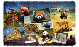 Copy of Wildlife Conservation