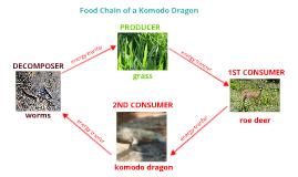 Food Chain of a Komodo Dragon by christian hall on Prezi